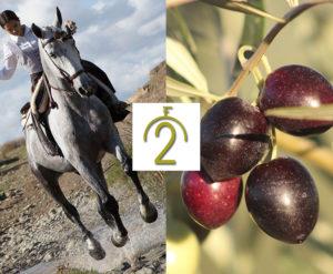 Lee más sobre el artículo La finca 'De Anitas' obtiene la certificación de agricultura ecológica